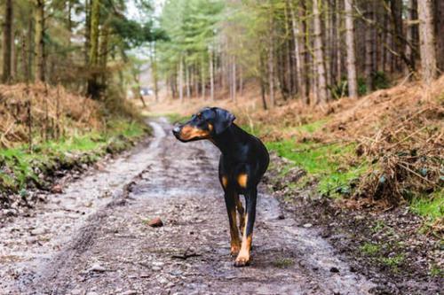 Individuele hondenuitlaat ~ 2018